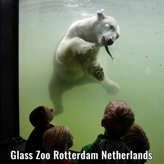 glass zoo rotterdam the netherlands a